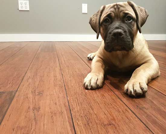 Best Pet Friendly Flooring Guide
